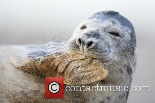 Seal 4