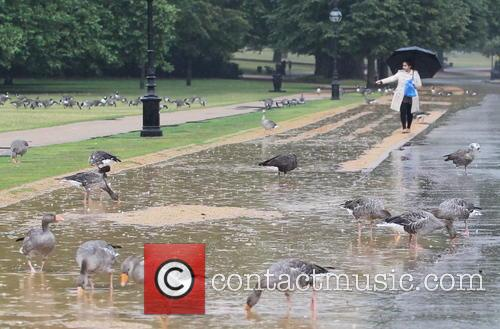 Wet Weather Pictures Hyde Park 5