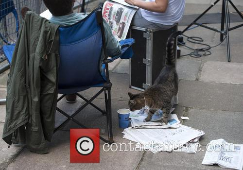 Freya the Chancellor's cat outside number 10