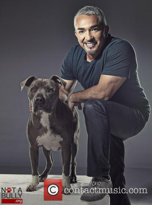 Cesar Millan and Pet Pit Bull Junior