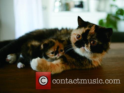 Memebon Cute Cat