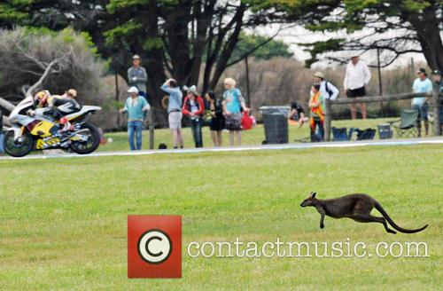 A kangaroo races on the grass along side...