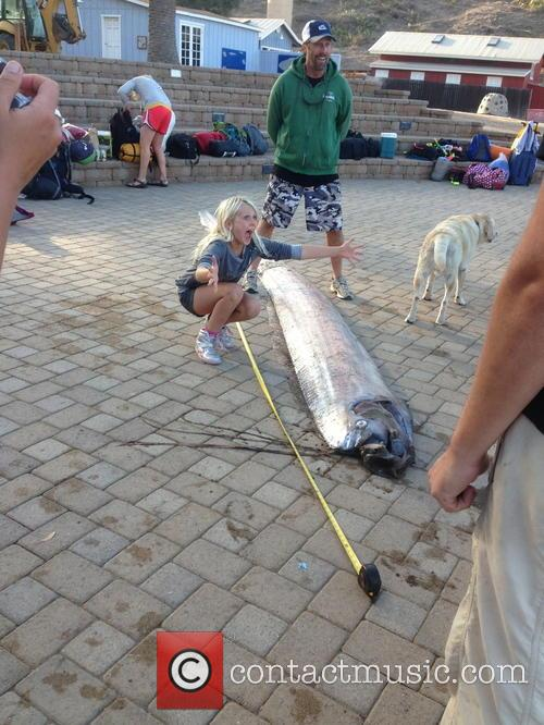 giant oarfish discovery 3915687