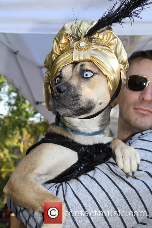 Halloween Dog Parade 2