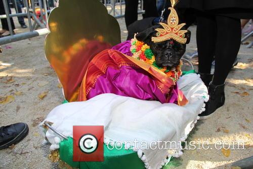 Halloween Dog Parade 4