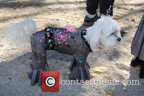 Halloween Dog Parade 7