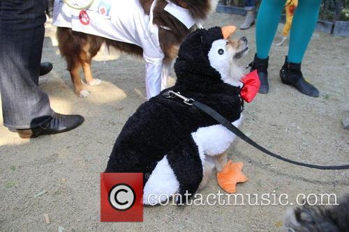 Halloween Dog Parade 8