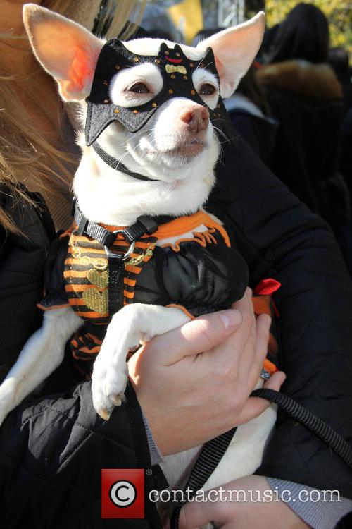 Halloween Dog Parade 9