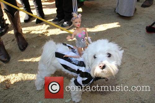 Halloween Dog Parade 11