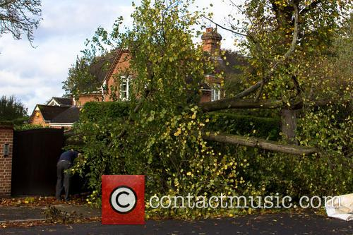 A tree surgeon assesses damage from a fallen...