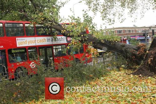 Tree Crashes On Bus 3