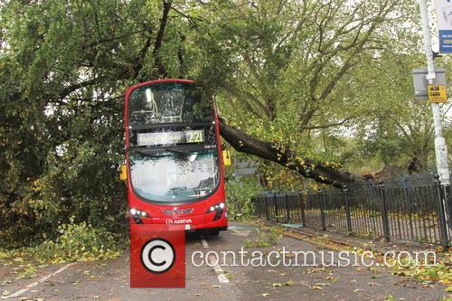 Tree Crashes On Bus 4