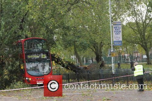 Tree Crashes On Bus 5