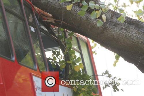 Tree Crashes On Bus 6