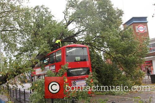 Tree Crashes On Bus 10