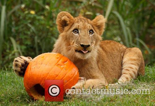 Lions Halloween
