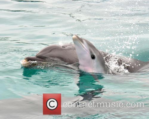 Dolphin Birth