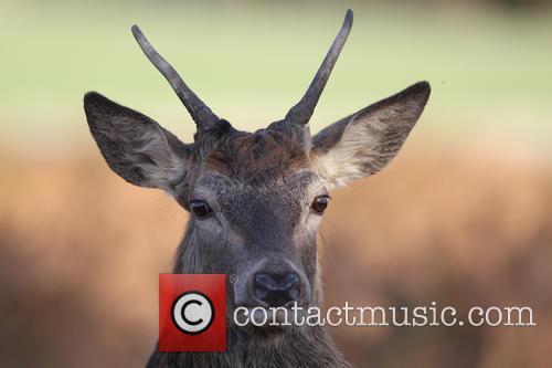 Deer Park Richmond
