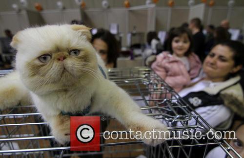 The International Cat Exhibition
