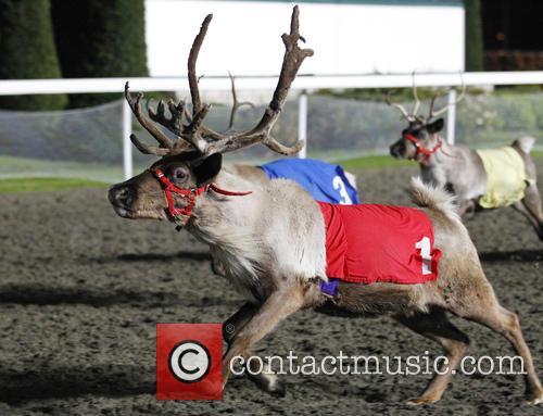 Kempton Park Racecourse's Reindeer Racing