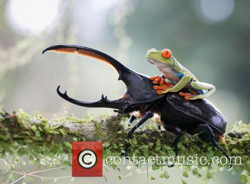 Perfectly-Timed Photo of a Tree Frog Riding a...