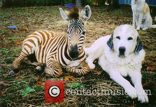 Rocky and Barcode The Zebra 2