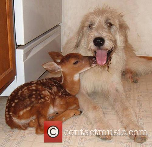 Rocky, Duncan The Dog and Nabisco The Fawn 7