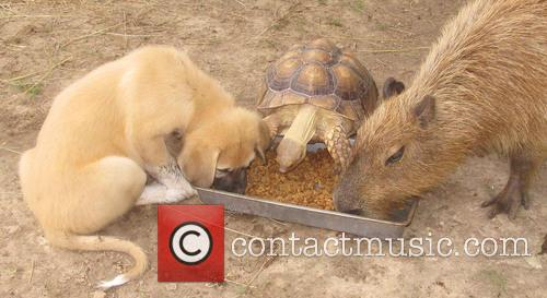 Tortoise, Cheesecake the Capybara and Rocky