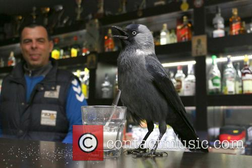 A jackdaw walks into a bar...