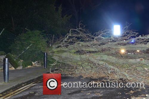 A fallen tree blocks a road in north...