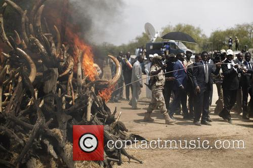 Ivory Burn in Chad