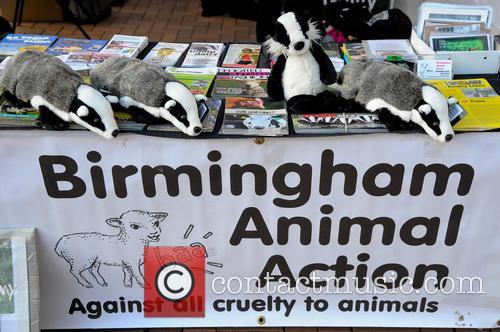 Birmingham against Badger Cull Protest
