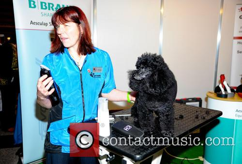 Crufts and Day 8