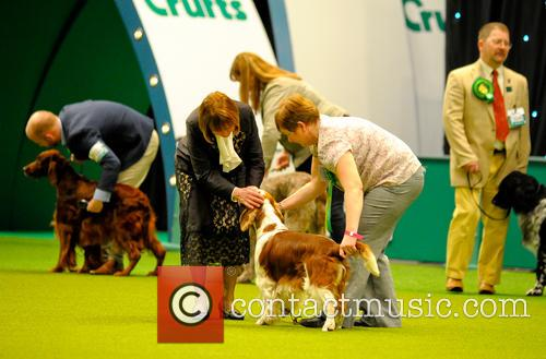 Crufts 2014 Agility Finals and Presentations Parade of...