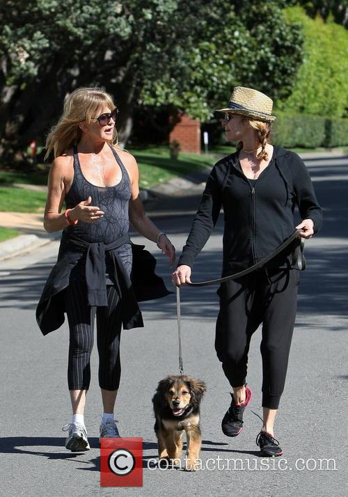 goldie hawn goldie hawn walking with a 4112583