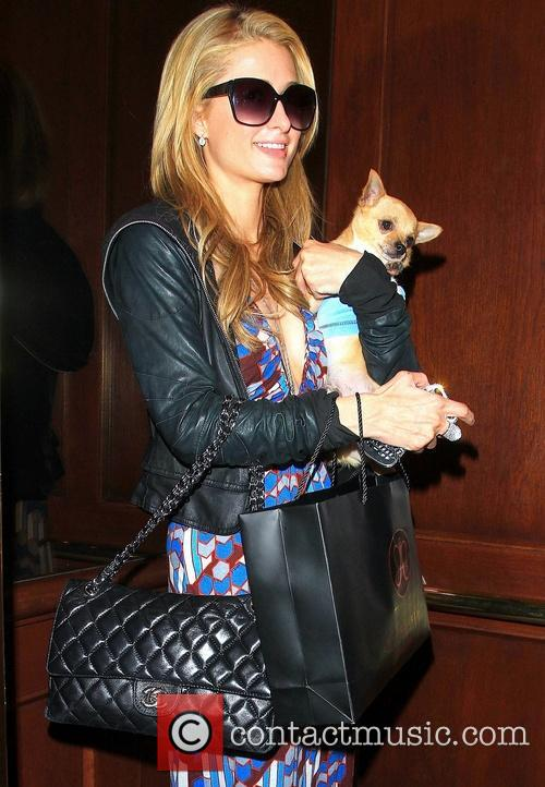 Paris Hilton walking along Bedford Drive with dog