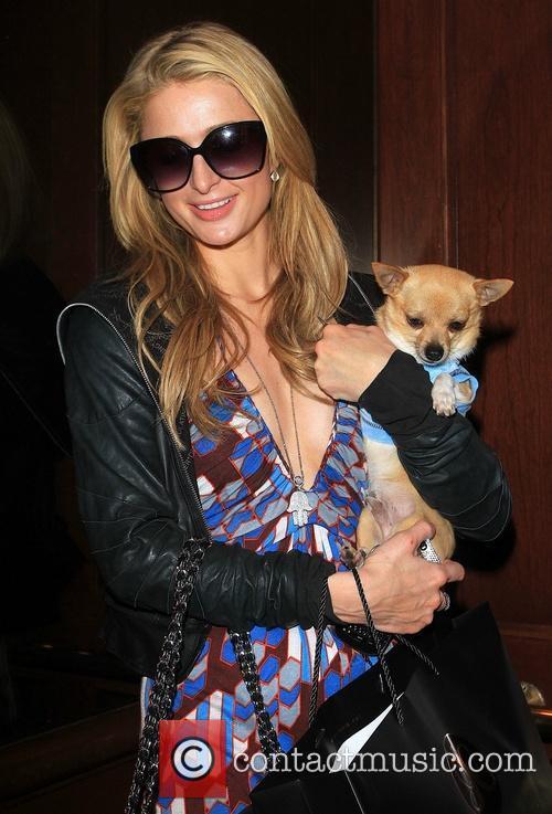 Paris Hilton walking along Bedford Drive with dog