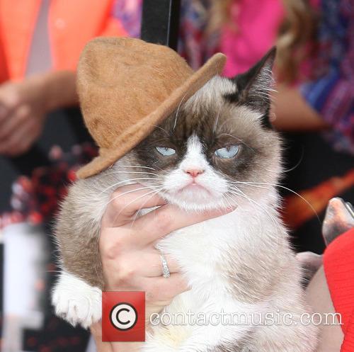 Grumpy Cat 4