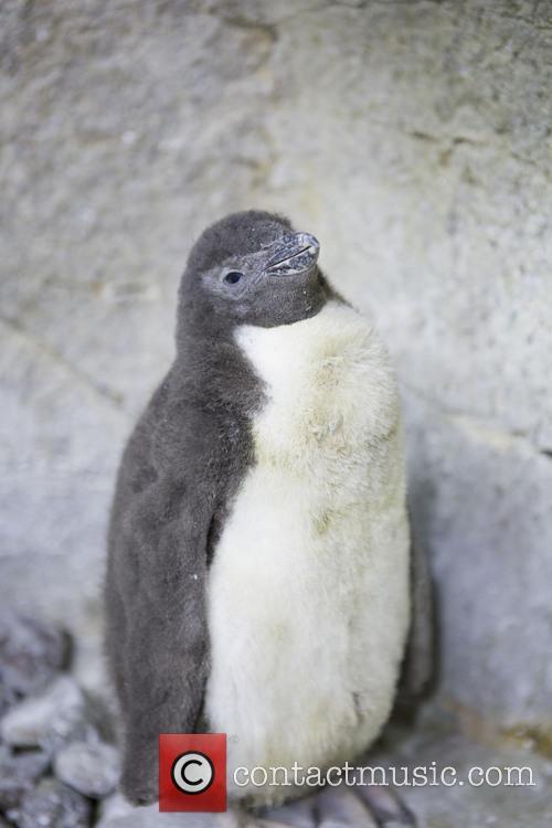 A Penguin Named Ruggles