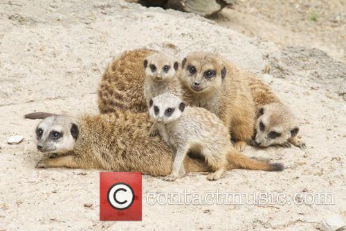 Meerkat Mob Welcomes Two New Members
