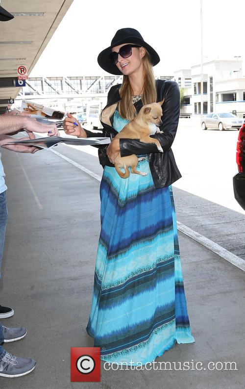 Paris Hilton arrives at LAX with pet chihuahua