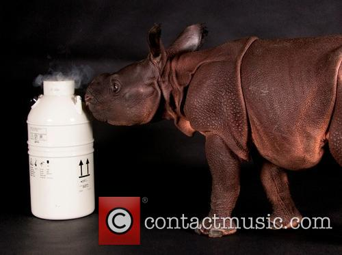 Deceased Rhino Dad Posthumous Birth