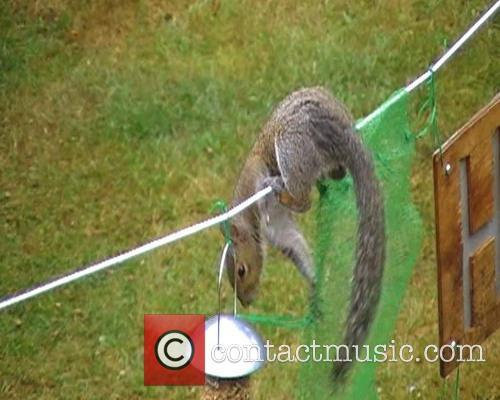 Squirrel Sprints Assault Course