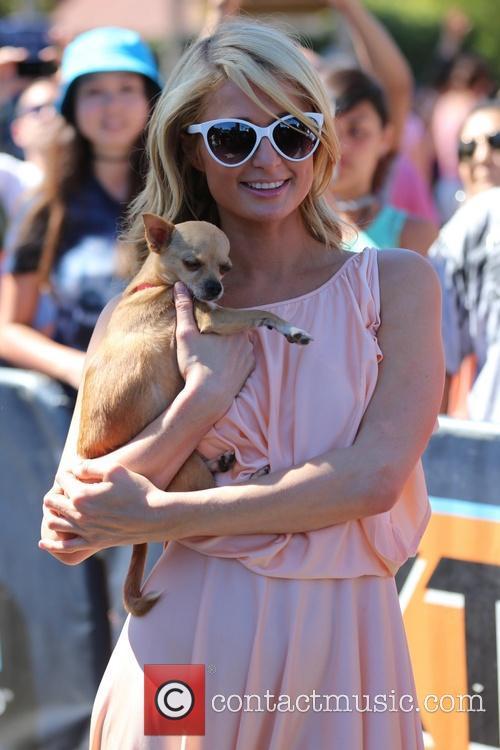 Paris Hilton, Universal Studios