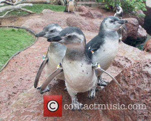World's First Test Tube Penguin
