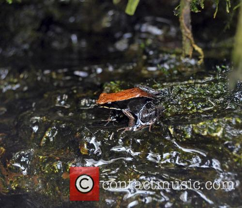 Fab Frogs and Terrific Toads