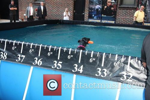 David Letterman and Dock Diving Dogs 10