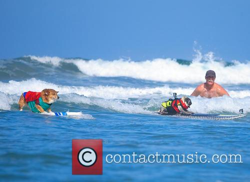 2014 Surf Dog Surf-A-Thon