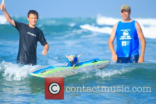 Surf Dog Surf-a-thon 2