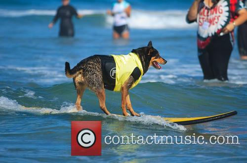 Surf Dog Surf-a-thon 3